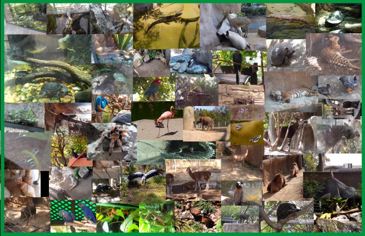 San Diego Zoo 2015 VBP