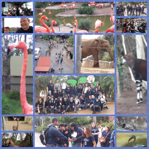 san-diego-zoo-2016